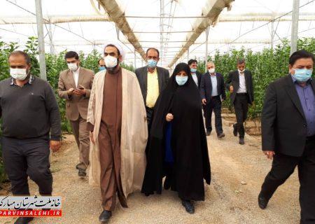 بازدید دکتر صالحی و عضو کمیسیون کشاورزی مجلس از گلخانههای شهرستان مبارکه